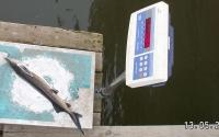 Взвешивание рыбы